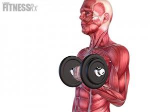Muscle Damage Not Necessary for Muscle Hypertrophy