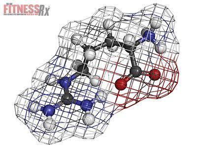Arginine Stimulates Protein Synthesis
