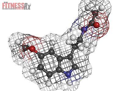 Melatonin - Influences Sex Steroids