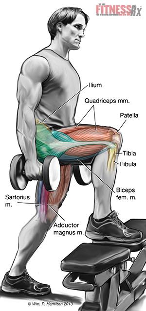 Muscle Form and Function - Ignite a Lower Body Revolution with Step-ups on a Bench