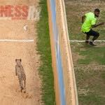Man Versus Cheetah - NFL Stars Devin Hester & Chris Johnson on Nat Geo TV