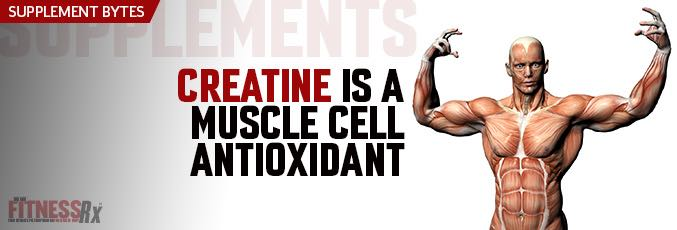 Creatine is a Muscle Cell Antioxidant