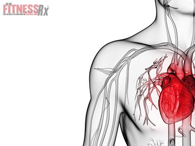 Reduced Growth Hormone In Obesity Increases Risk of Heart Disease