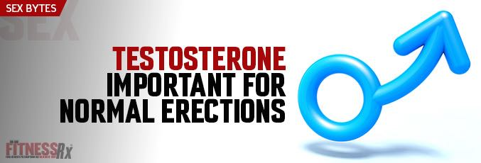 Testosterone Important for Normal Erections