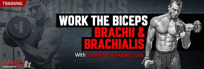 Work the Biceps Brachii & Brachialis