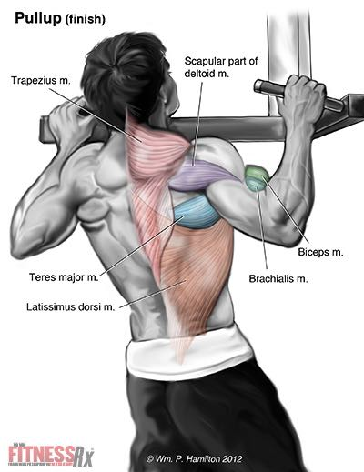 The Ultimate Upper Body Exercise
