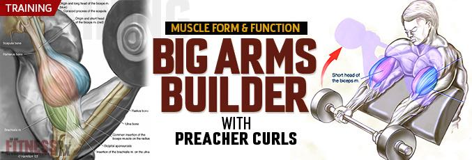 Big Arms Builder - With preacher curls