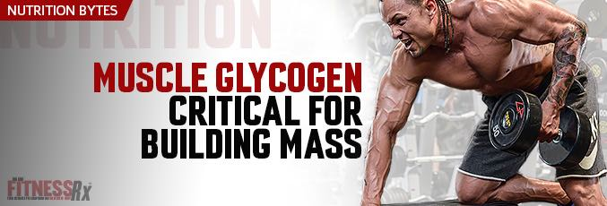 Muscle Glycogen Critical for Building Mass