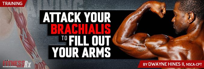 Attack Your Brachialis To Fill Out Your Arms