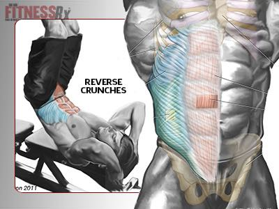 Target Your Lower Abs - With Reverse Crunches
