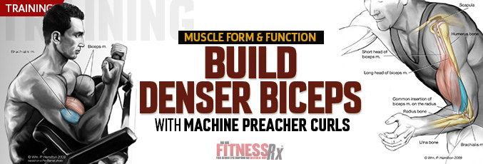 Build Denser Biceps