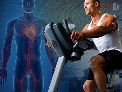 Stiff Muscles Equals Stiff Arteries