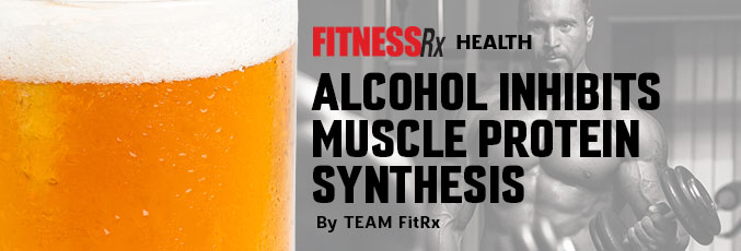 Alcohol Inhibits Muscle Protein Synthesis