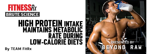 High Protein Intake Maintains Metabolic Rate During Low-Calorie Diets