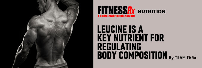 Leucine Is a Key Nutrient for Regulating Body Composition