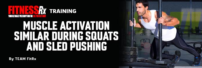 Muscle Activation Similar During Squats and Sled Pushing