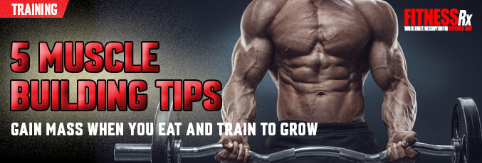 5 Muscle Building Tips
