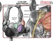 Blast Your Inner Chest and Tris