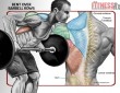 Thicken Your Upper and Middle Back