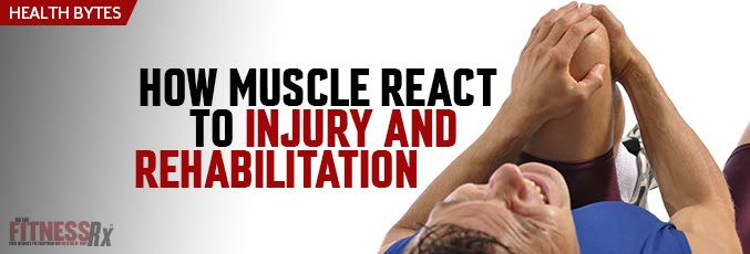 How Muscle Reacts to Injury and Rehabilitation