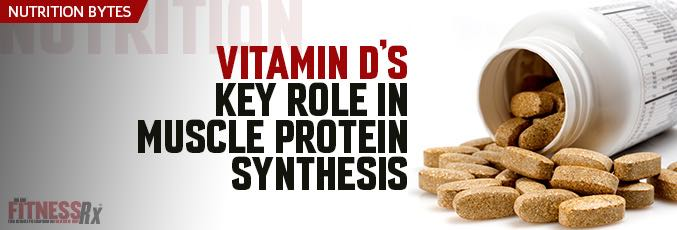 Vitamin D's Key Role in Muscle Protein Synthesis