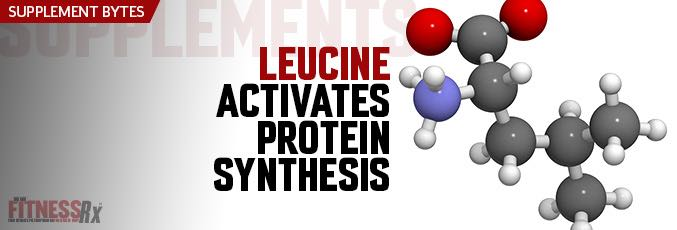 Leucine Activates Protein Synthesis