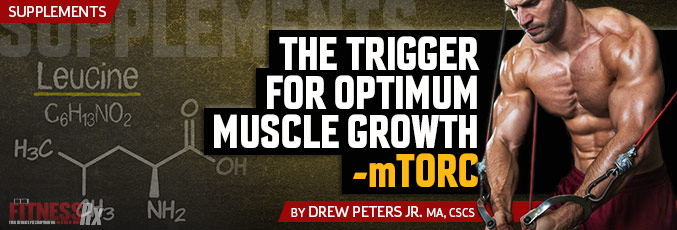 The Trigger For Optimum Muscle Growth – mTORC