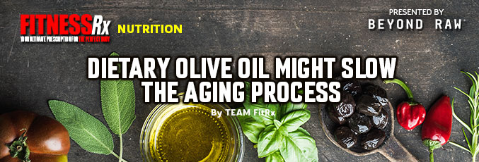 Dietary Olive Oil Might Slow the Aging Process