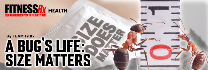 A Bug's Life: Size Matters