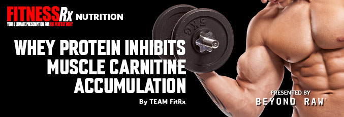 Whey Protein Inhibits Muscle Carnitine Accumulation